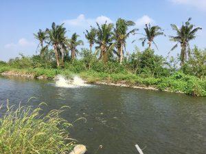 テラピアの養殖池