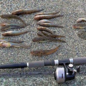 ハゼ釣りのアイキャッチ画像